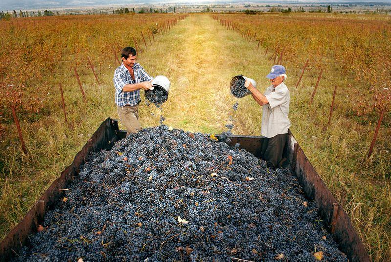 Грузинские традиции: виноделие