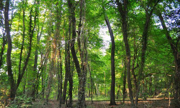 Самурский лес в Дагестане