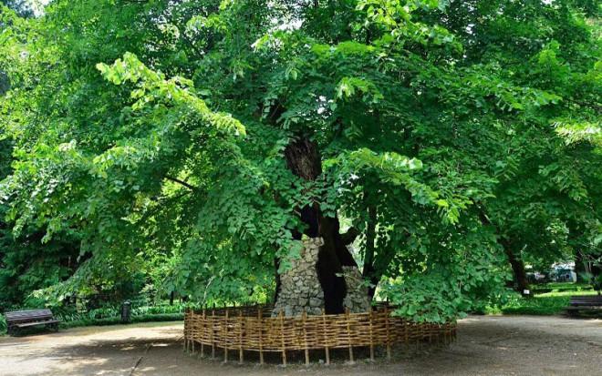 Ботанический сад в Сухуми фото