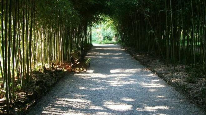 Сухумский ботанический сад в Абхазии
