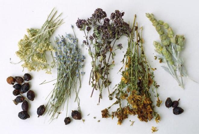 Лечебные травы и их свойства