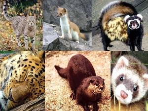 Животные и растения, занесенные в Красную книга Дагестана