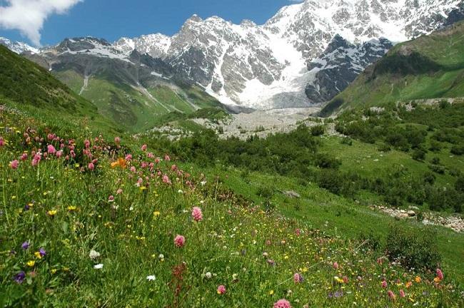 Растения гор Кавказа имеют лечебные свойства
