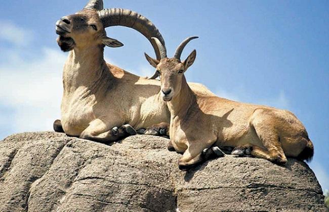 Дагестанская природа богата различными видами животных и растений, часть из которых эндемики