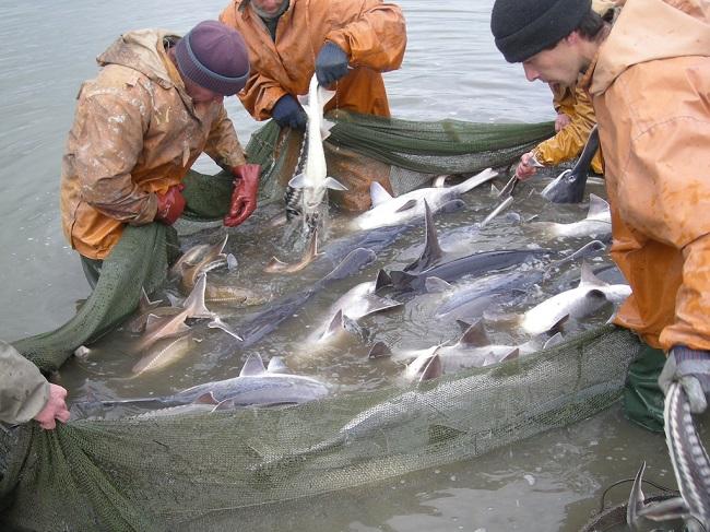 Прикаспийские государства ведут борьбу с браконьерами