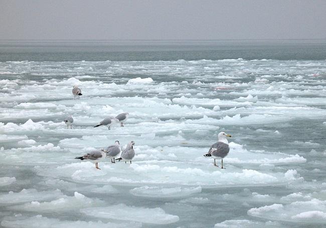 Очень редким явлением является то, что вода Каспия замерзает
