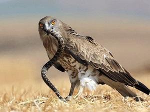 Некоторые виды животных обитают высоко в горах
