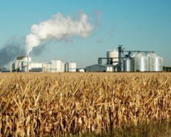 Переработка пшеницы: в СКФО появится новый завод
