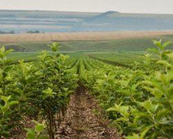 Дочерняя структура «Садов Ставрополья» приобрела долги агрофирмы из Кабардино-Балкарии