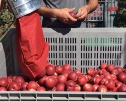 Бизнес поддержит «ковид»-госпиталь витаминами