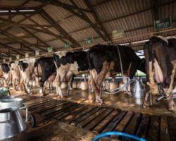 В Дагестане запустят 2 молочные фермы