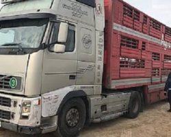 Ставропольский племзавод экспортировал в Армению КРС калмыцкой породы