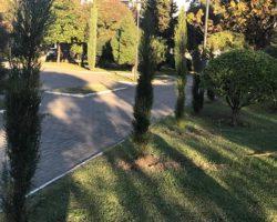 В Парке Славы Сухума появилось 95 новых деревьев