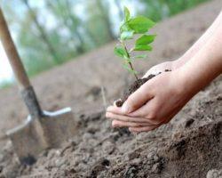 «Сохраним лес»: в РСО–Алания высажено почти 300 тысяч деревьев