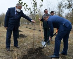 Ингушетия активно участвует в «Сохраним лес»