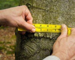 В Дагестане проведена инвентаризация лесов