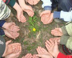 В Карачаево-Черкесии будут созданы школьные экологические отряды
