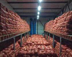 Переработка овощей: на Ставрополье появится круглогодичный цех